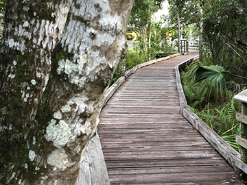 Oxbow Lichen Boardwalk