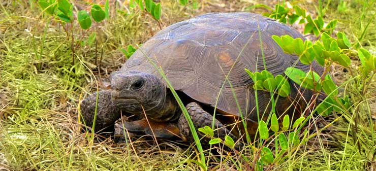 oxbow-gopher-tortoise-slide