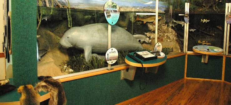 oxbow-interior-display-manatee-slide
