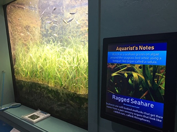 New LED display at St. Lucie County Aquarium
