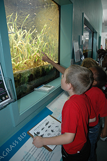 school kids in pointing at the seagrass tank