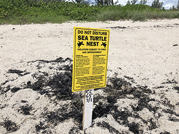 sea turtle nest sign in the sand